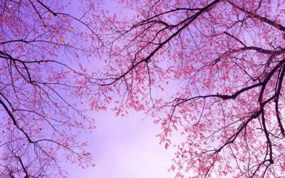 Healing Sounds for Libra